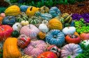 pumpkin-2190584_640